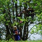 木登りは楽しい