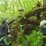 山菜採りをする小学生グループ